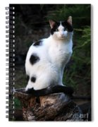 Black And White Cat On Tree Stump Spiral Notebook