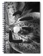 Black And White Lily Up Close Spiral Notebook