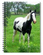 Black And White Paint Horse Spiral Notebook