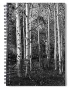 Black And White Photograph Of Birch Trees No. 0126 Spiral Notebook
