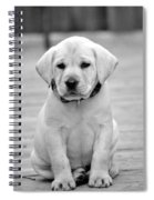 Black And White Puppy Spiral Notebook