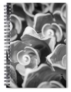 Black And White Sea Shells Cozumel Spiral Notebook