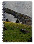 Black And White Sheep - Romeo The Ram Spiral Notebook