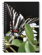 Black And White Swallowtail Square Spiral Notebook