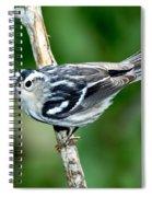 Black-and-white Warbler Mniotilta Varia Spiral Notebook
