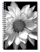 Black And White Zennia Spiral Notebook