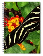 Black And Yellow Butterfly Spiral Notebook