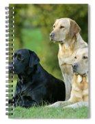 Black And Yellow Labrador Retrievers Spiral Notebook