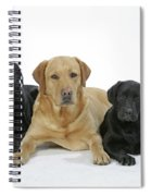 Black And Yellow Labradors With Puppy Spiral Notebook