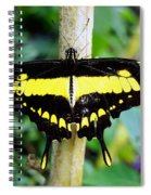 Black And Yellow Swallowtail Butterfly Spiral Notebook