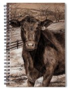 Black Angus In The Field Spiral Notebook