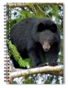 Black Bear 2 Spiral Notebook