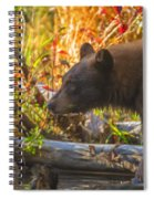 Black Bear Autumn Spiral Notebook
