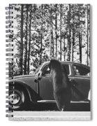 Black Bear Begging Spiral Notebook
