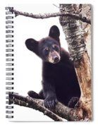 Black Bear Cub Up In A Dead Tree In Northern Minnesota Spiral Notebook