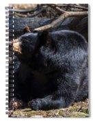 Black Bear Guarding Food Spiral Notebook