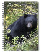 Black Bear II Spiral Notebook