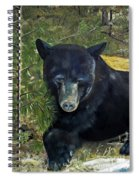 Bear Painting - Scruffy - Profile Cropped Spiral Notebook