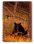 Black Bear Sticking Out Her Tongue  Spiral Notebook