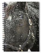Black Beauty In A Blizzard Spiral Notebook
