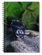 Black Beetle Spiral Notebook