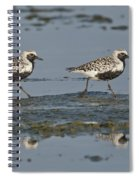 Black-bellied Plovers Spiral Notebook