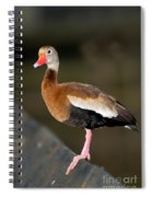 Black-bellied Whistling Duck Spiral Notebook