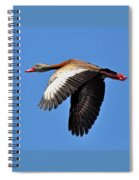 Black-bellied Whistling-duck In Flight  Spiral Notebook