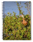 Black-bellied Whistling Ducks Spiral Notebook