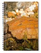 Black Breasted Leaf Turtle Spiral Notebook