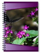 Black Butterfly 07 Spiral Notebook