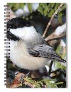 Black-capped Chickadee 9527 Spiral Notebook