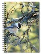 Black Capped Chickadee Spiral Notebook