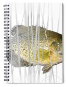 Black Crappie Pan Fish In The Reeds Spiral Notebook