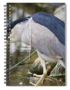 Black-crown Heron Going Fishing Spiral Notebook