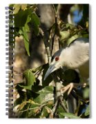 Black-crowned Heron Looking For Nesting Material Spiral Notebook