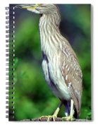 Black-crowned Night Heron Juvenile Spiral Notebook