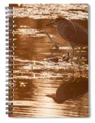 Black-crowned Night Heron Sunset Spiral Notebook