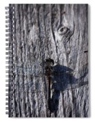 Black Darter Spiral Notebook