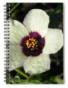 Black Eye Susan In The Prairie Spiral Notebook