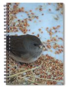 Black Eyed Junco Spiral Notebook