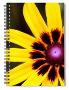 Black Eyed Susan 3 Spiral Notebook