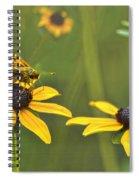 Black Eyed Susans Visitor Spiral Notebook
