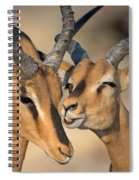 Black-faced Impalas Aepyceros Melampus Spiral Notebook