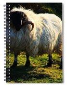 Black Faced Mountain Sheep Spiral Notebook