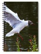 Black Head Gull - Preparing For Landing Spiral Notebook