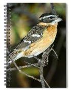 Black-headed Grosbeak Female Spiral Notebook