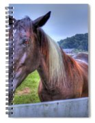 Black Horse At A Fence Spiral Notebook