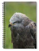Black Kite 1 Spiral Notebook