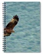 Black Kite Spiral Notebook